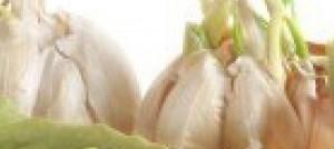 """Nutraceutica: inserire nella dieta """"supercibi"""" che combattono il cancro"""