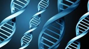 GENETIC05