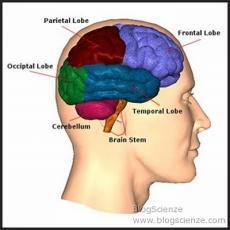 Scoperta molecola che rende più aggressivo il tumore al cervello