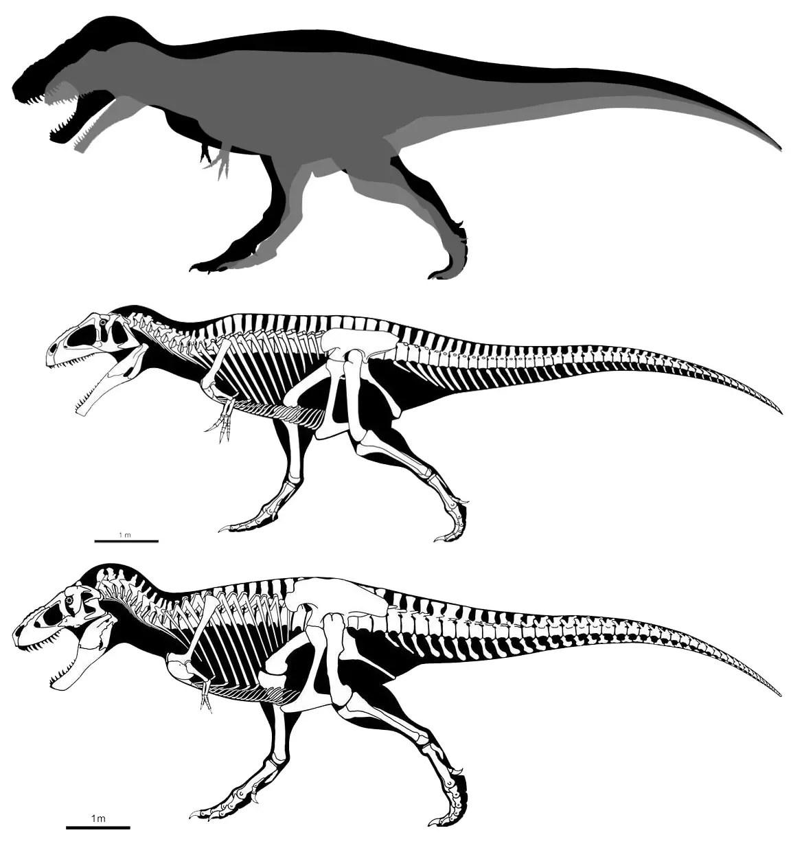 Tyrannosaurus Rex Vs Giganotosaurus Dinosaurs Forum