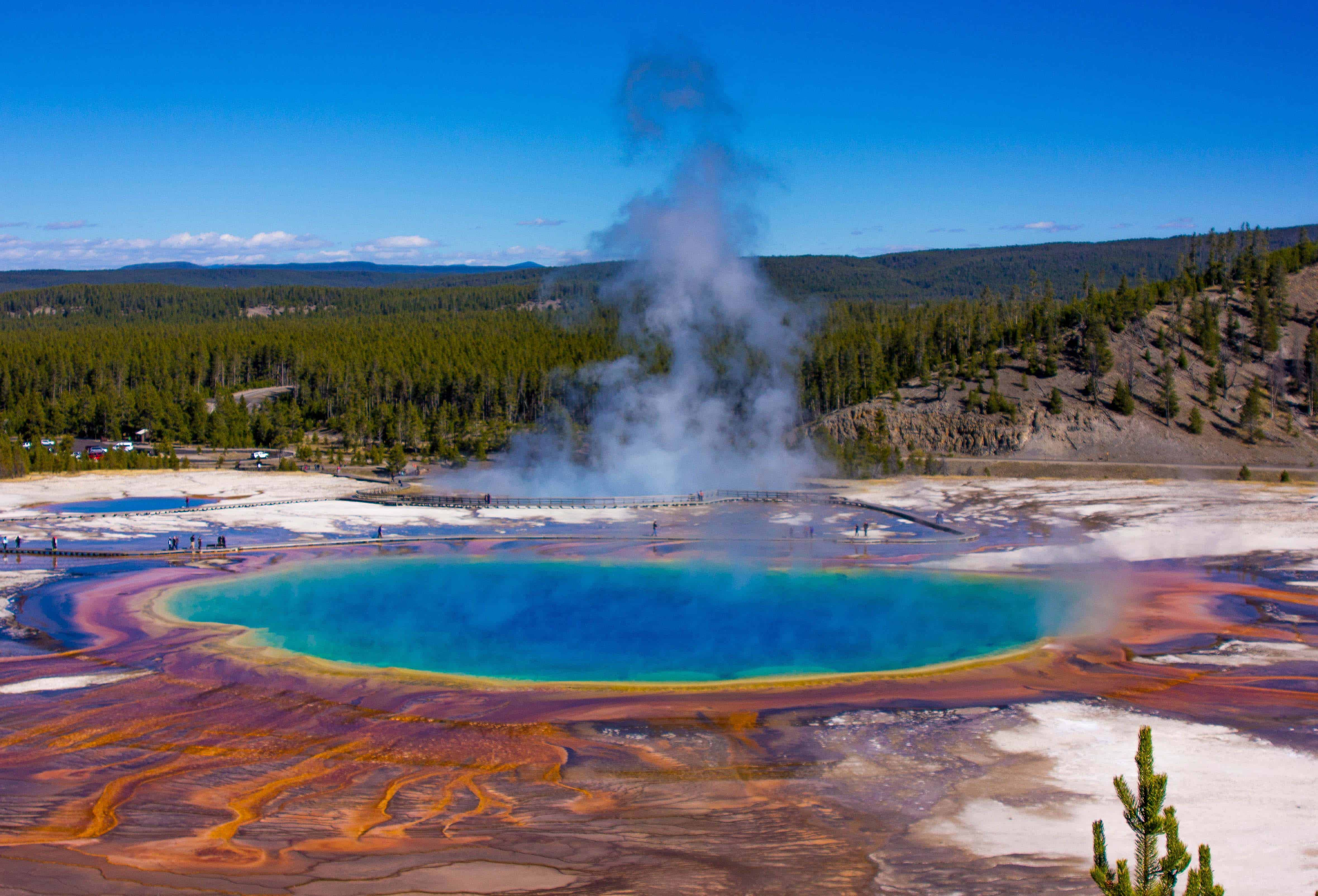microbes animals and a super volcano my love with a