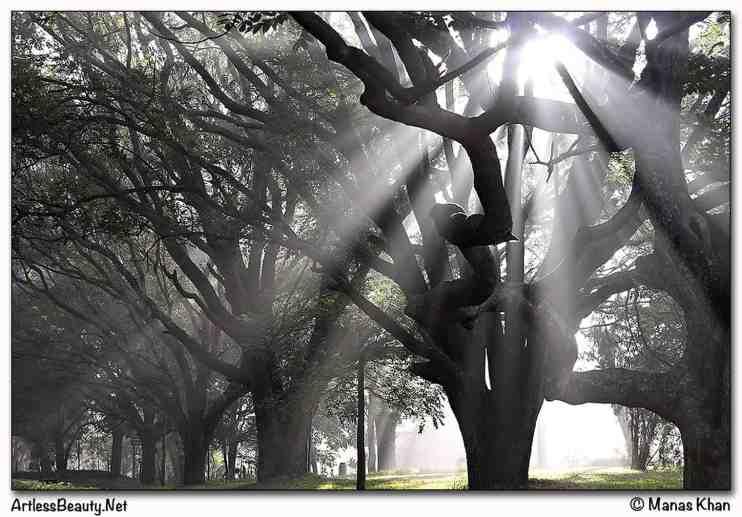 Morning Rays (1)