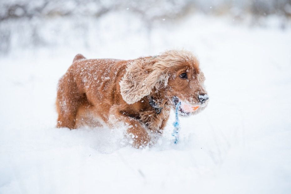 Danger hiver chien