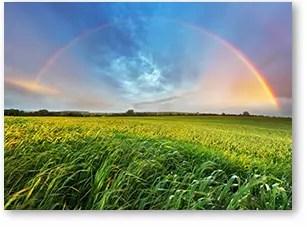 rainbow-mercy