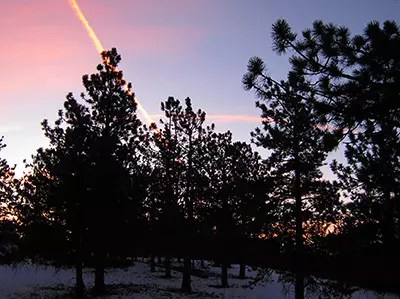 Sunrise over trees with a bright streak of light.