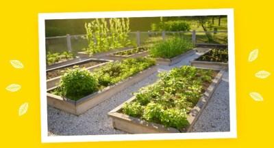 Coltiviamo la sostenibilità