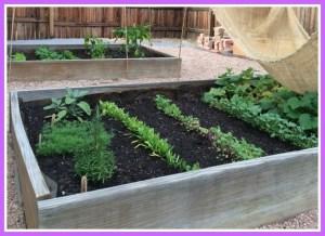 Our first garden ever!