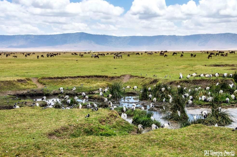 Hippo Lake - 'Ngorongoro Crater, Tanzania (Africa)