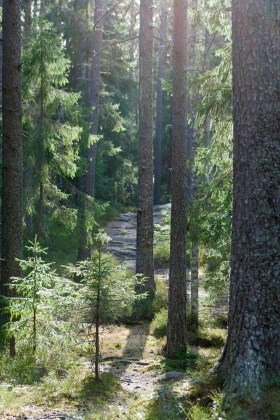 The beckoning forest surrounding Nydalasjön.