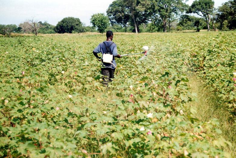 A farmer using a tool in a crop field