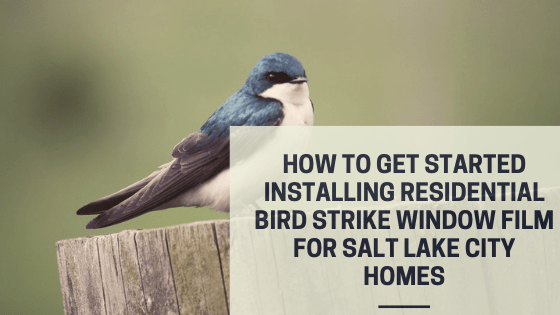 How to Get Started Installing Residential Bird Strike Window Film for Salt Lake City Homes
