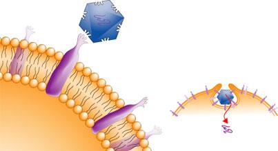 rhinovirusreception[2]-GIF.jpg