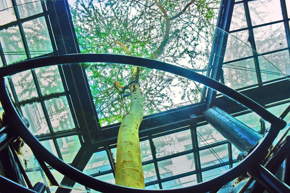thorntree