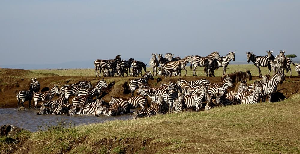 Maasai_Mara