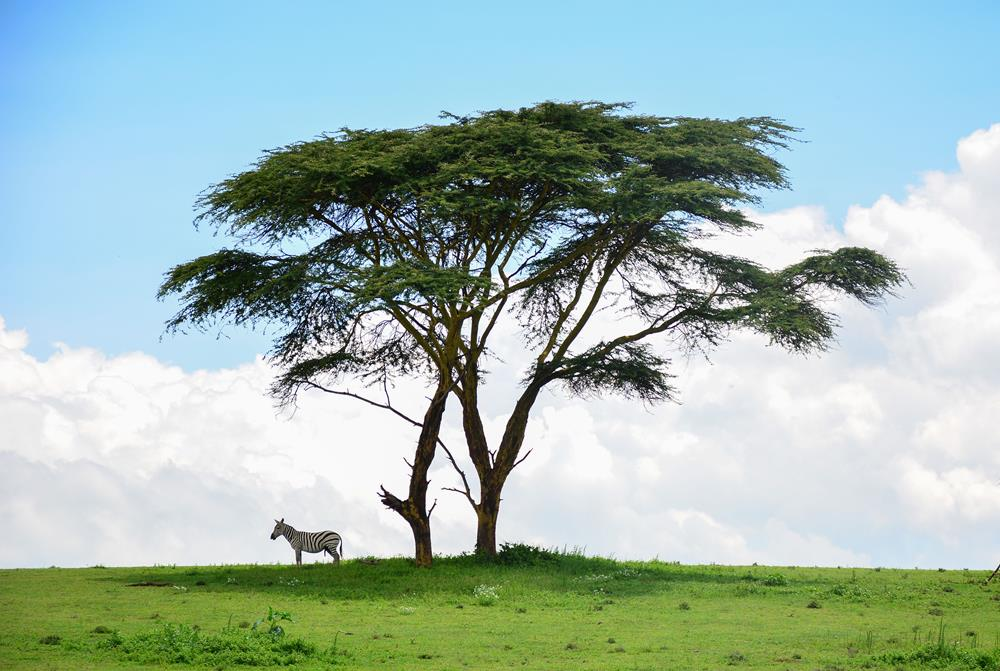Lake_Naivasha