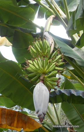 jwalker_bananas1