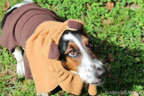 jvanderbeek_howl_halloween_dog_costumes_-10