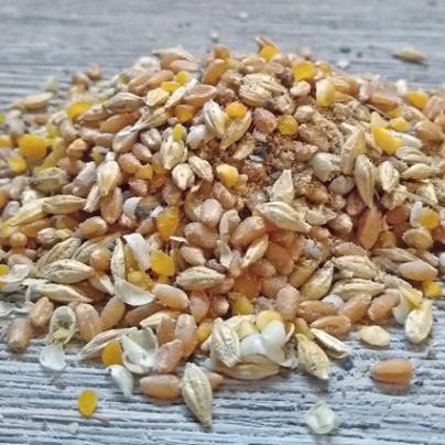 Non GMO Chicken Feed