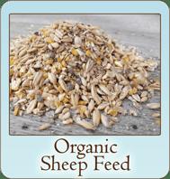 scratch-peck-feeds-organic-sheep