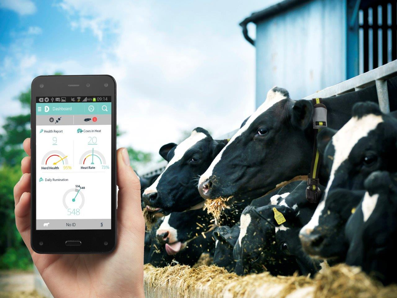 Heatime Hr System For Accurate Heat Detection In Cows Automated Drafting Gate