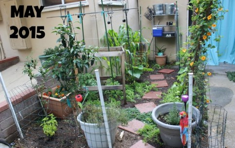gardenMay15