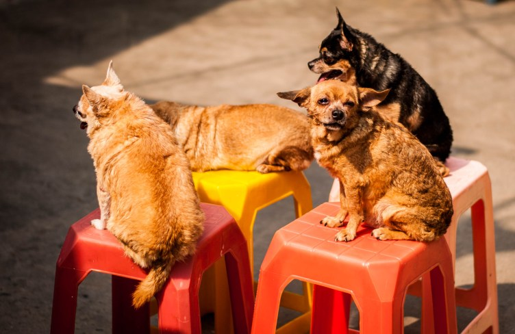 Dogs basking in the gentle January sunshine in Saigon