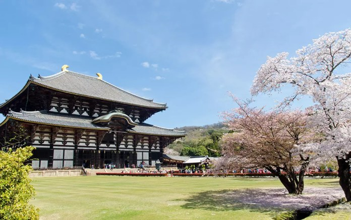 Todaiji Daibutsuden and Sakura Trees