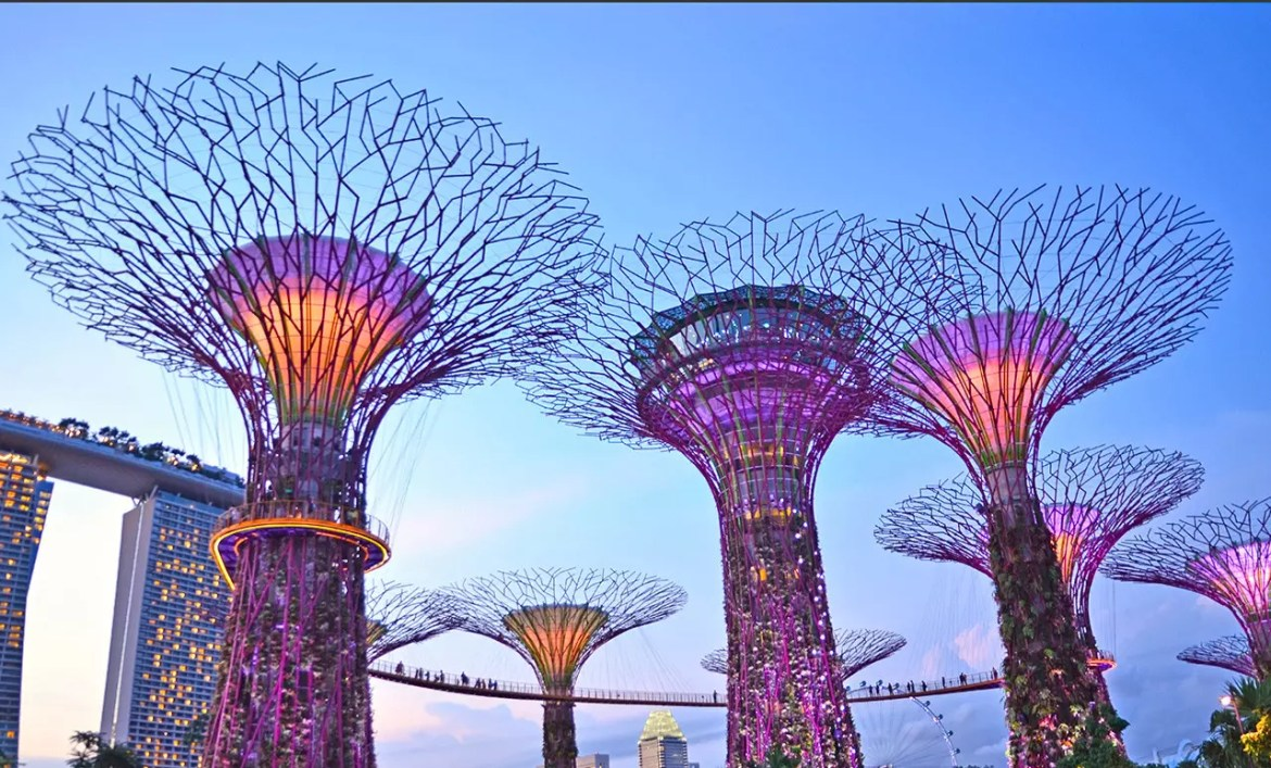 Supertrees Grove at Evening.