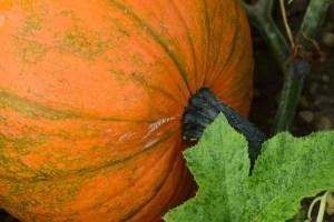 creative writing, writing, poetry, haiku, fall, autumn, pumpkin