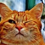 creative writing, cat, indoor cat, writing, haiku, poetry, poem