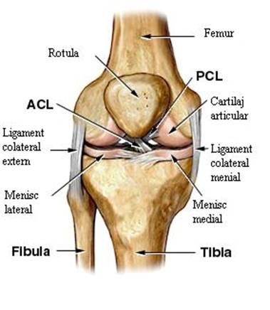 menisc leziunea mecanismului de formare a genunchiului