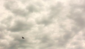Clouds with Bird