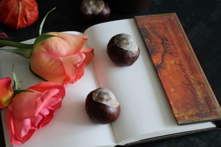 Scrivi e basta: un quaderno pronto ad accogliere parole