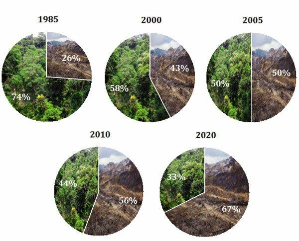 deforestazione-anni