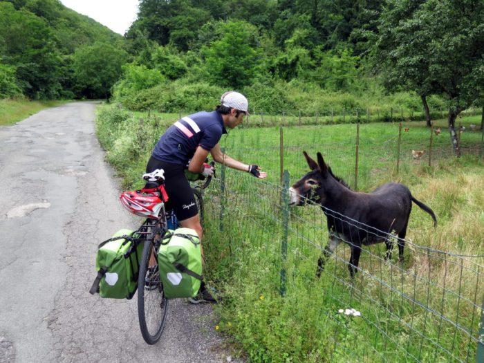 natura-asino-donkey