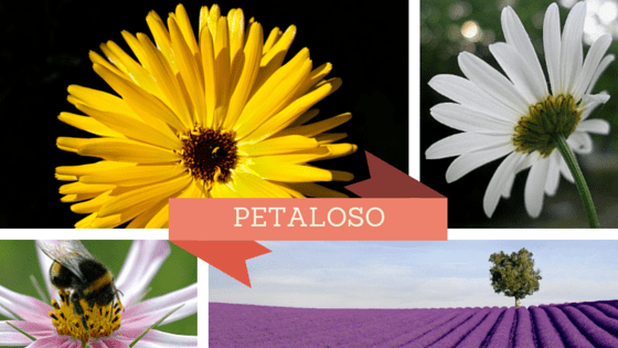 petaloso_nuove_parole_italiane_wp