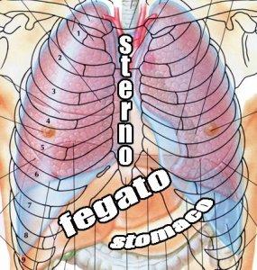 come funziona lo stomaco