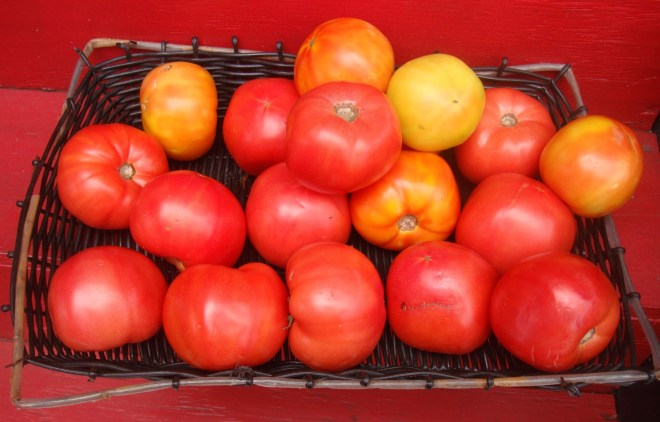 Plaquemines Parish Has Some Of The Finest Tomatoes In USA