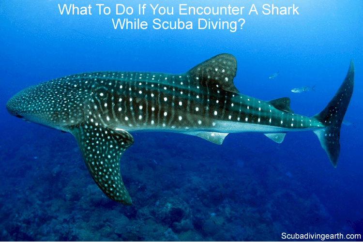What to do if you encounter a shark while scuba diving