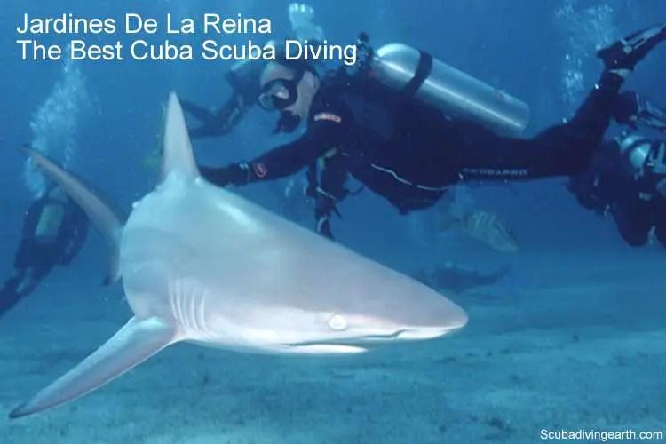 Jardines De La Reina Liveaboard (Best Cuba Scuba Diving)
