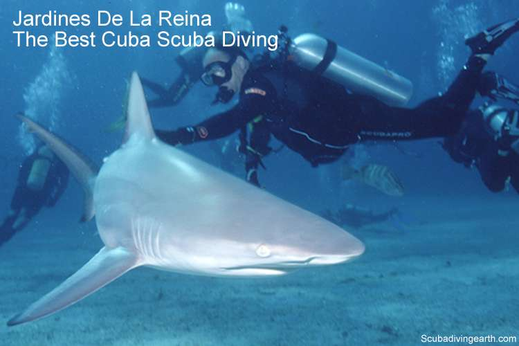 Jardines De La Reina Liveaboard - Best Cuba Scuba Diving