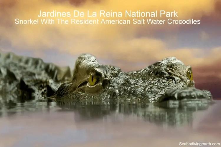 Jardines De La Reina National Park - Snorkel with the resident American salt water crocodiles