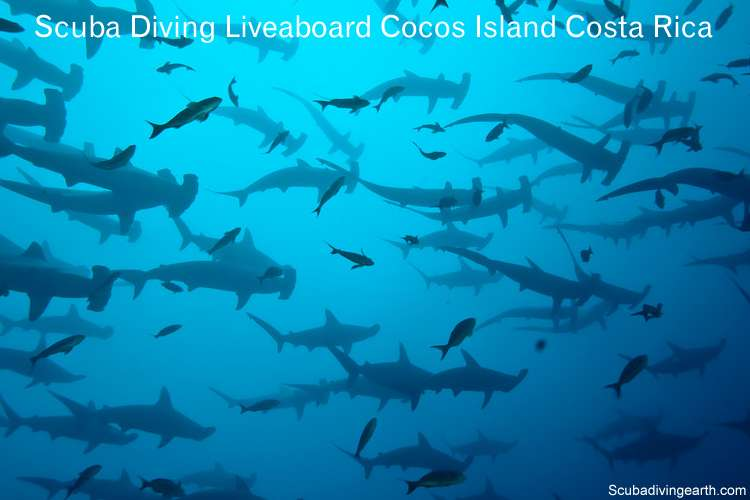 Scuba Diving Liveaboard Cocos Island Costa Rica (Diving with Hammerheads)
