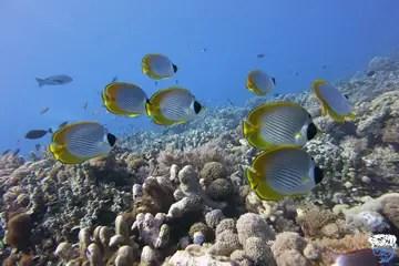 Australia liveaboards for single divers
