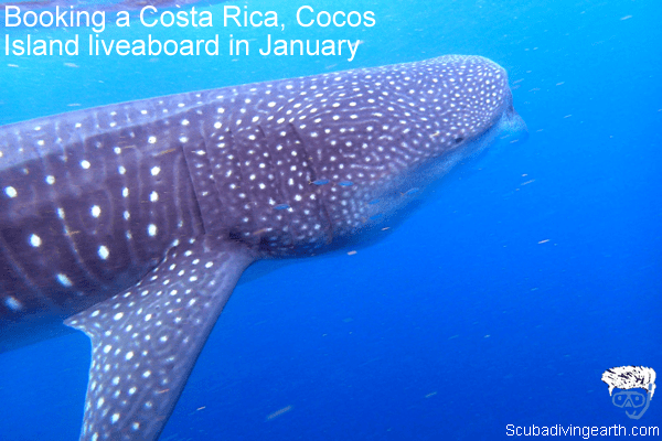 Booking a Costa Rica, Cocos Island liveaboard in January