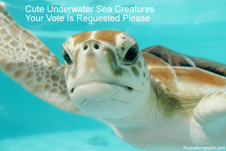 Cute Underwater Sea Creatures Your Vote Is Needed