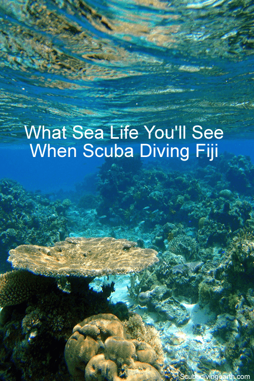 Fiji Scuba Diving Liveaboard - What sea life you see when scuba diving Fiji