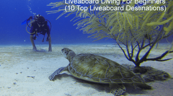 Liveaboard Diving For Beginners - 10 Top Liveaboard Destinations