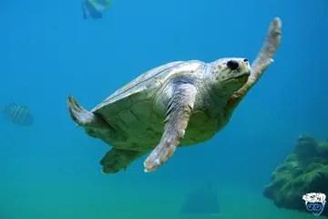 Single cabin diving liveaboard Bahamas