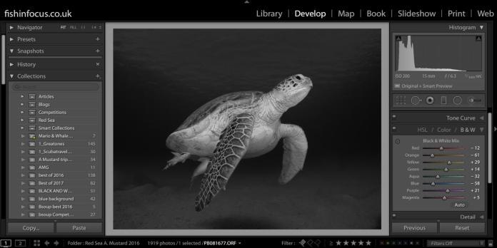 Scuba Travel, fishinfocus, black and white,